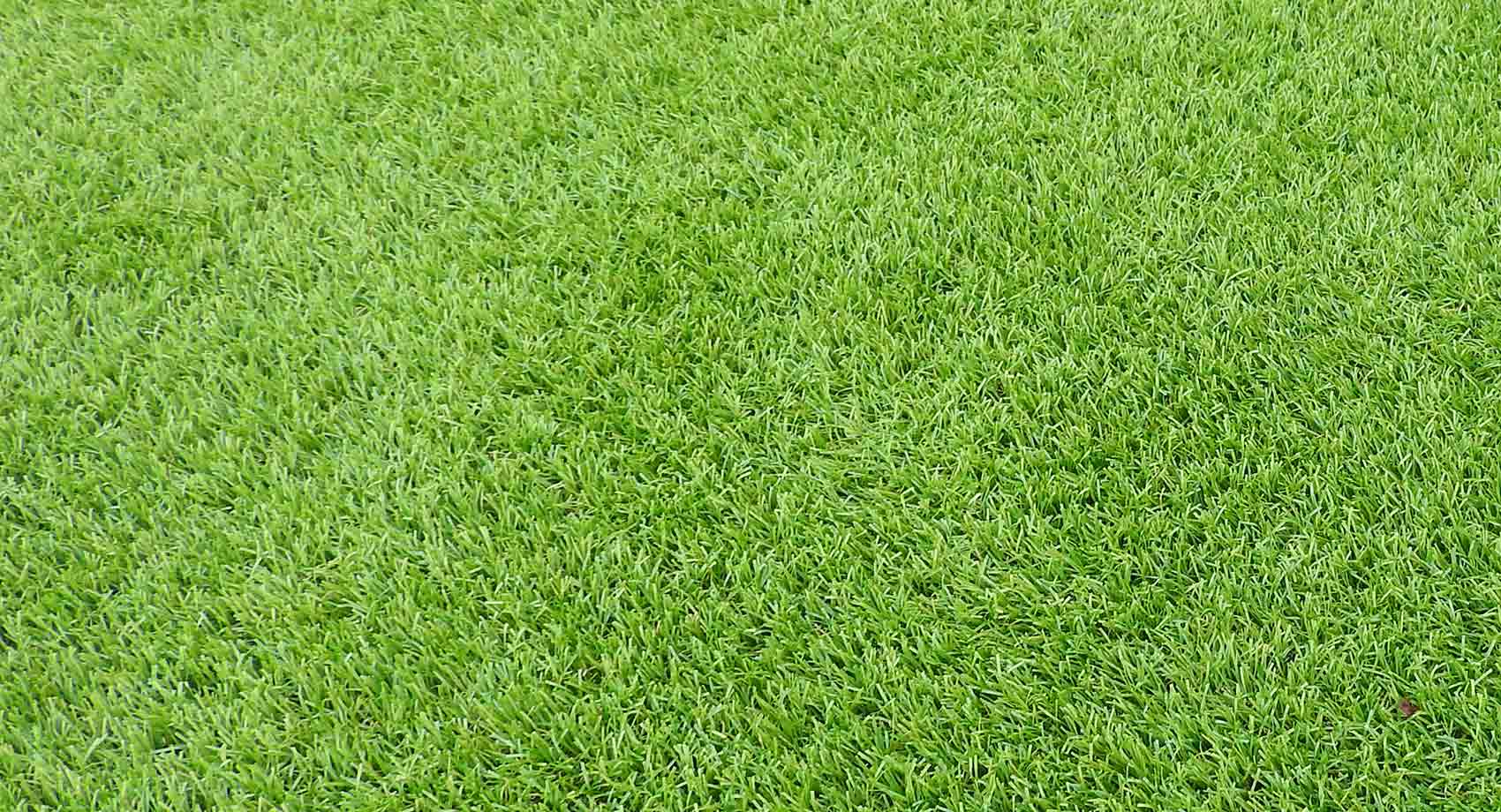 Artificial Grass Dias Flooring